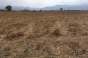 Земеделска земя до Покровнишко шосе