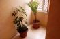под наем: стая с баня+WC с включени ток, вода и интернет